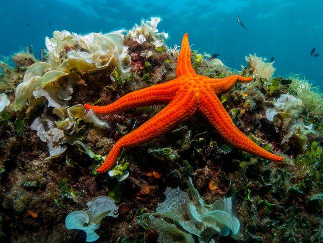 starfish-on-reef.jpg.653x0_q80_crop-smart